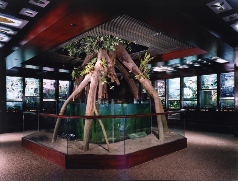 Zoolex Image Treasures Of The Congo Gallery