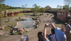 Guests view into watering hole habitat