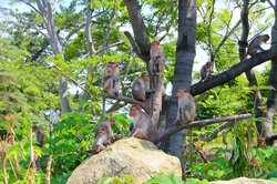 Macaques on top of the hill