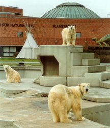 Polar bear exhibit